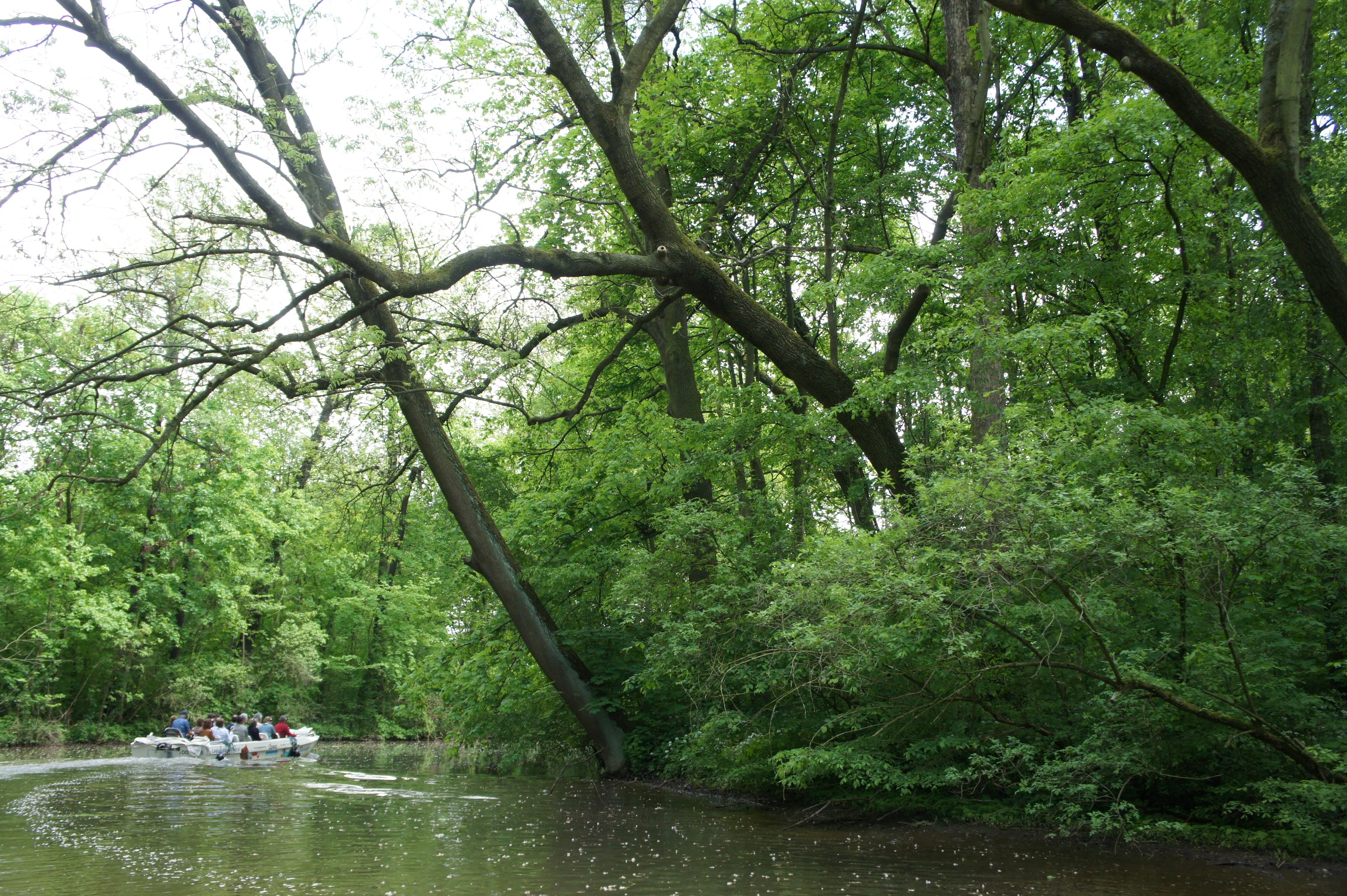 Experiencing the floodplain forests of the city of Leipzig, Germany, from the river (photo by Matilda Annerstedt)