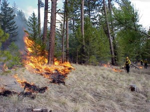 Prescribed fire used by the Tribes for centuries (Flathead Indian Reservation managed by the Confederated Tribes of the Salish and Kootenai Tribes). Photo by IFMAT-III