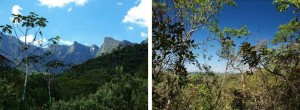 "Fig. 2: Particular need for ""Supersites for Forest Science"" in the sub-tropical zonobiome, exemplifying Atlantic Forest (State of Rio de Janeiro/Brazil; left) and Cerradao (State of Sao Paulo/Brazil; right). Photos: R. Matyssek"