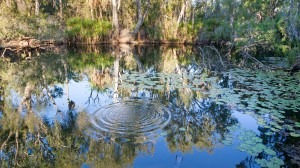 Bitter Springs Mataranka, Northern Territory, Australia.