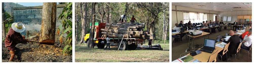 gfep-illegal-timber-blog-banner