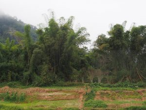 Agroforestry area in Laos. Photo: Renate Prüller, IUFRO Headquarters