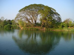 Tree at lake, Laos. Photo: all-free-download