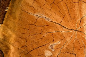 Tree rings. Photo: Geoff Roberts, USA.