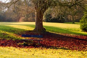Bench under a tree. Photo: all-free-download, George Hodan