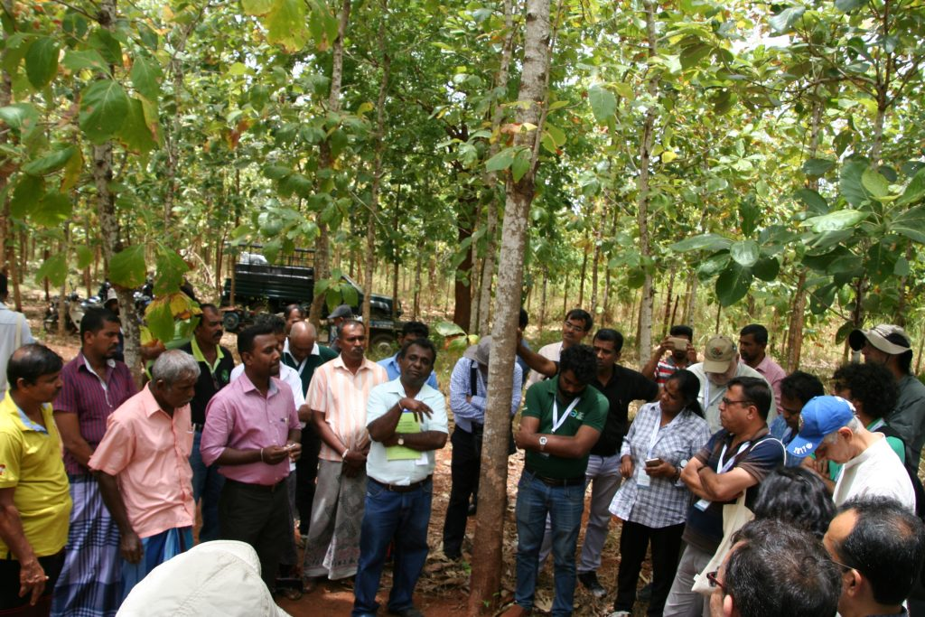 Global Landscape Forum – Social Reporting | IUFRO Blog
